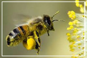 August 19 - National Honey Bee Awareness Day