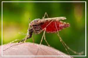 August 20 - World Mosquito Day