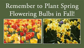 spring-flowering bulbs
